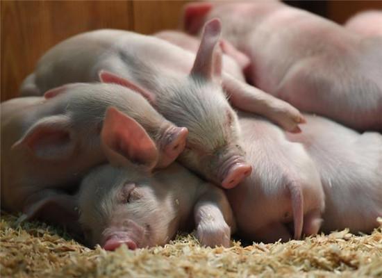 仔猪成活率.png